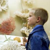 Дети до 16 лет смогут бесплатно посещать музеи России