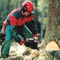 Обрезка садовых деревьев: в чем суть?