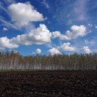 В Омской области активно идет посевная