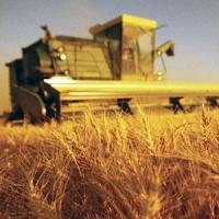 Кормиловский район планирует управиться с уборкой зерна за 10 дней