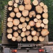 В Омской области на 23% выросли объемы лесозаготовки