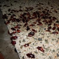 Омич пожаловался на знатные вечеринки тараканов на тепловом коллекторе