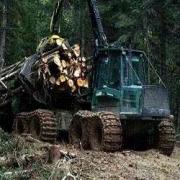 Омичи начнут заготавливать лес по скандинавским технологиям