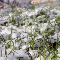 В Омской области май начнется с похолодания и снега