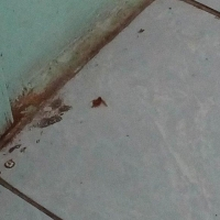 Пациентам из омской БСМП-2 не нравятся падающие с потолка тараканы