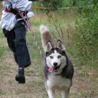 В Омске пройдет чемпионат по езде на собачьих упряжках