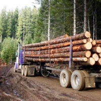 В Омской области контролируют транспортировку древесины