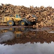 В Омске борются с лесной коррупцией