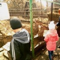 Впечатления после посещения Большереченского зоопарка