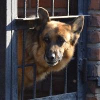 Омские зоозащитники предлагают сделать отлов собак более гуманным