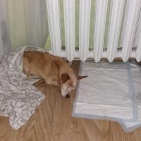В Омске пенсионер чуть на задушил собаку на глазах у прохожих