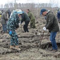 Лесной фонд Омской области пополнился 12-ю тысячами сосен