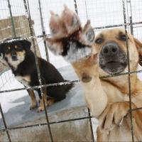 На бездомных животных Омска потратят более 10 миллионов рублей