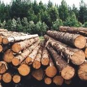Пермские лесопромышленники хотят участвовать в ПАРКе