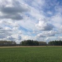 В Омской области посевная идет с опережением показателей 2016 года