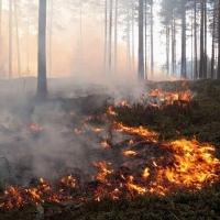 В Омской области вспыхнули леса