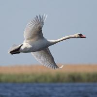 Охотник в Омской области решил проверить меткость на краснокнижной птице