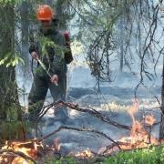 Омские леса потушат по тендеру