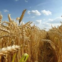В Омской области засеяли на 3,7 тысяч гектаров меньше, чем год назад