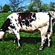 Вопросы и ответы по качеству молока