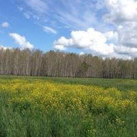 В Омской области проведен первый укос трав