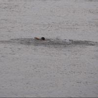 За один день в Омской области утонули 25-летний парень и 27-летняя девушка