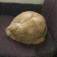В Омске рыжий кот неделю ездит в маршрутке