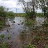 На Иртыше и Оми растет уровень воды