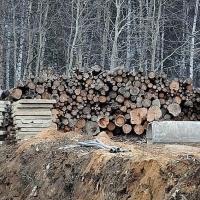 В Омской области ущерб от «черных лесорубов» может вырасти до 4 млрд рублей