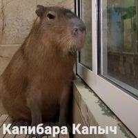 В омском зоопарке капибара грустит и ждет у окна невесту