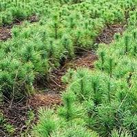В Омской области 6 мая пройдет Всероссийский день посадки леса