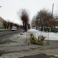 В провалившийся асфальт на дороге в Омске поставили елки
