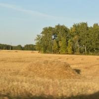 Еще три района Омской области завершили осеннюю страду