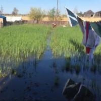 В Омске затопило дачные участки