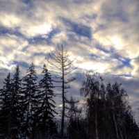 Прогноз погоды в Омске с 20 по 26 марта