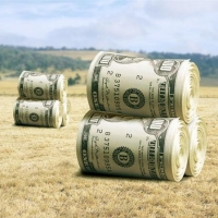 Омск получит 400 миллионов на развитие сельского хозяйства