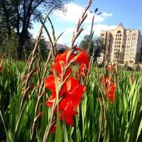 Руководителем «Управления развития сельских территорий» назначен сын цветочного магната