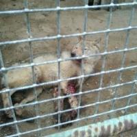 Прокуратура проверит содержание животных в Большереченском зоопарке