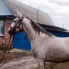 Омич готов променять коня на машину