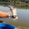 В Омской области на Крутинском рыбзаводе достраивают цех по разделке и переработке рыбы