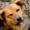В Омске запретили отстреливать бездомных собак с использованием яда