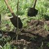 Омичей приглашают засадить березами голую степь в микрорайоне «Амурский-2»