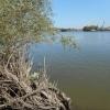 Омская комиссия Минприроды проверила информацию о гибели рыбы в Дружино