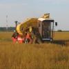 В Омской области началась уборка льна