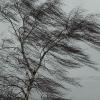 В ближайшие часы в Омской области ожидается штормовой ветер