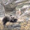 В Сибири нашли следы медведя, вымершего 20 лет назад
