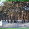 """Сосновый бор у гостиницы """"Иртыш"""" защитят зоной рекреации"""