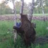 Егери Омской области подкармливают косолапых сгущенкой