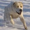 Омичка, пострадавшая от укосов собак, получит от их хозяина 80 тысяч рублей