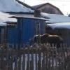 В Омске артист цирка держал медведицу во дворе своего дома